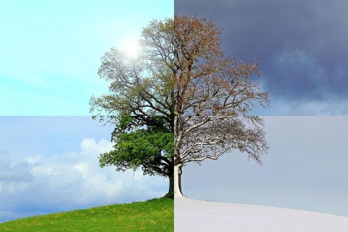 seasons-of-the-year-1127760_960_720